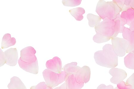 Photo for Rose pink petals background. Tender floral pattern isolated on white - Royalty Free Image