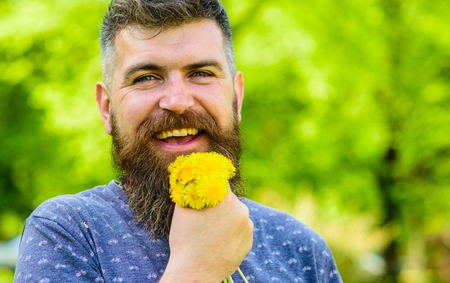 Man with beard and mustache on happy face holds bouquet of dandelions. Romantic hipster made bouquet, green nature background, defocused. Bearded man holds yellow dandelions. Romantic concept