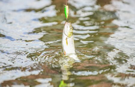 Catch me if you can. Fish hook bait. Fishing equipment. Leisure in nature. Transparent water. Hobby sport activity. Trout bait. Fishing lake river freshwater. Good catch. Fly fishing. Fish on hook