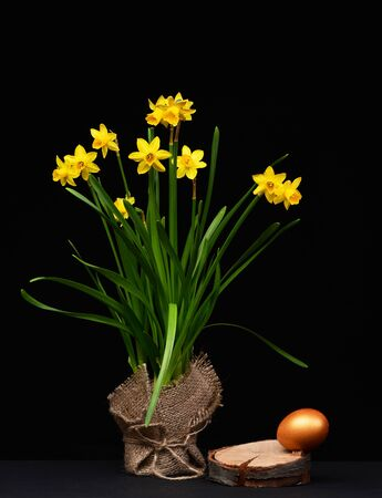 Photo pour set of traditional egg painted in golden color on wooden brick and bouquet of daffodils isolated on black background. Happy Easter concept - image libre de droit