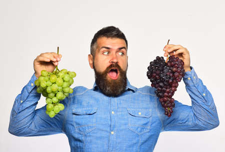 Foto für Winegrower with surprised face holds clusters of grapes - Lizenzfreies Bild