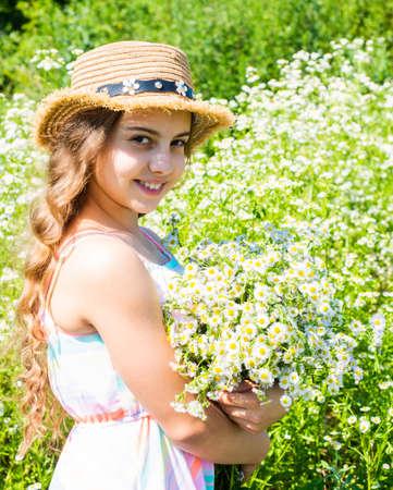 Photo pour Harvest fresh herbs. Little girl collecting chamomile flowers in field, flora concept - image libre de droit