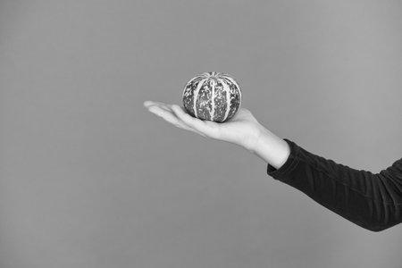 Foto de For traditional Halloween decoration. Small pumpkin on hand. Traditional autumn vegetable orange background. Traditional Thanksgiving food. Traditional holiday menu. Pumpkin carving tradition - Imagen libre de derechos