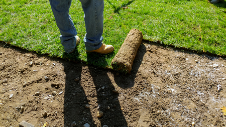 Photo pour Unrolling Sod with fresh natural roll green lawn grass - image libre de droit