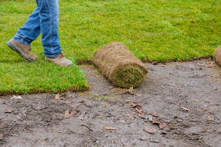 Photo pour Gardener installing natural grass turf professional installer beautiful rolled sod lawn field. - image libre de droit