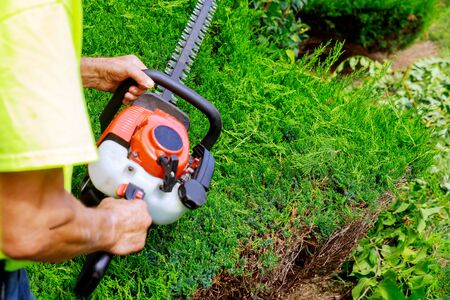 Photo for Pruning trees with gardener in pruning trees with trimmer - Royalty Free Image