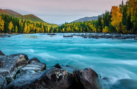 Foto per River flowing out of the Kanas Lake at Autumn, Xinjiang, China, The tree color is changed to yellow, Sky beautiful on the background. - Immagine Royalty Free