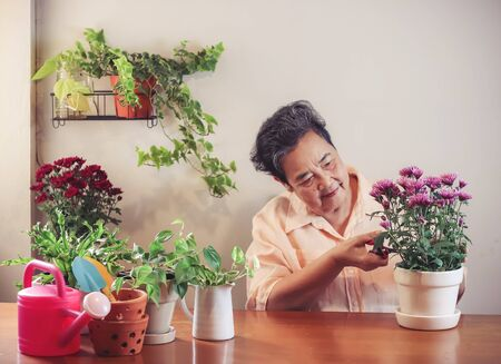 Photo pour Happy Asian senior  woman  sitting at wooden table indoor , taking care of plant cutting dry leaves  ,smiling happily to her plants in plant pot.Gadening concept. - image libre de droit