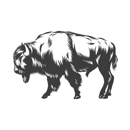 Ilustración de American buffalo inked vector illustration isolated - Imagen libre de derechos