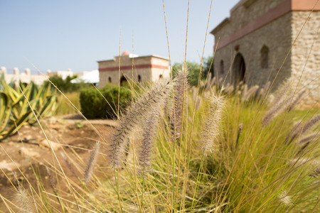 Diversely plants in front of sunset. Essaouira