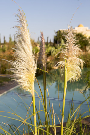 Diversely plants in front of sunset and swimming pool behind. Essaouira
