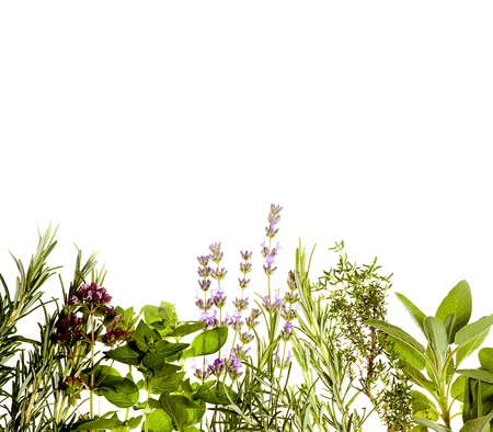 Mediterranean herbs on pure white background  lavender, sage, oregano, thyme  Spring and summer concept  Plenty of copyspace