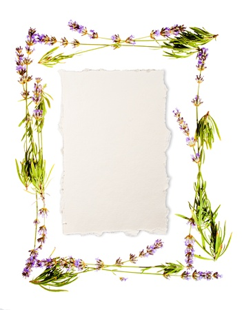 Lavender frame isolated on white  Sheet of aged watercolour paper in the centre for your message  If you donの写真素材