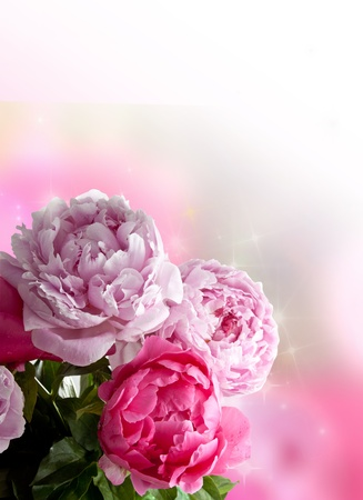 Photo for Beautiful pink peonies on white background  Plenty of copy space, perfect as a greetings card or for a love message  - Royalty Free Image