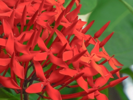 red spikes is  the symbol of acumen