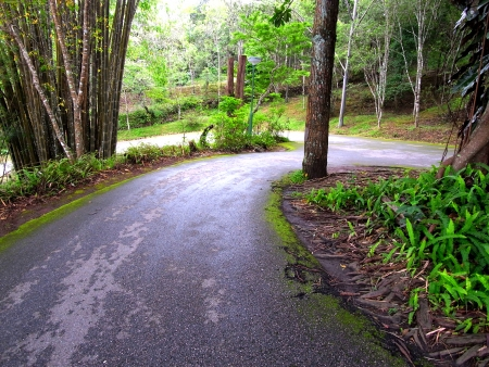Downhill road with a sharp curve goes through a forest