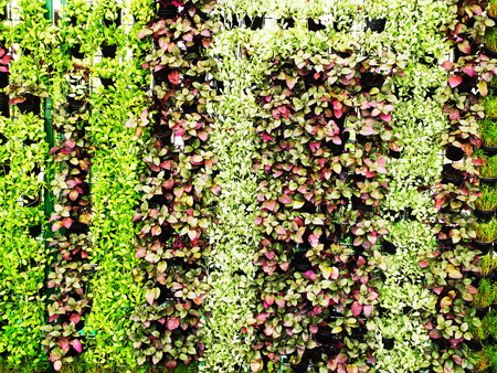 A vertical garden of various plants to create a cool shady and save space.