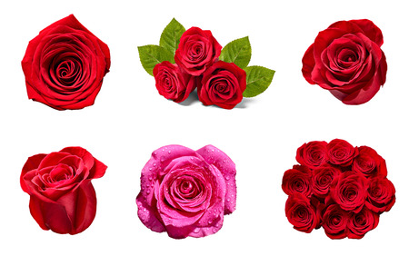 Photo for collection of various roses on white background. - Royalty Free Image