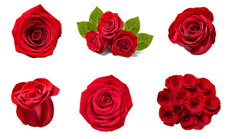 Photo for collection of various roses on white background. each one is shot separately - Royalty Free Image