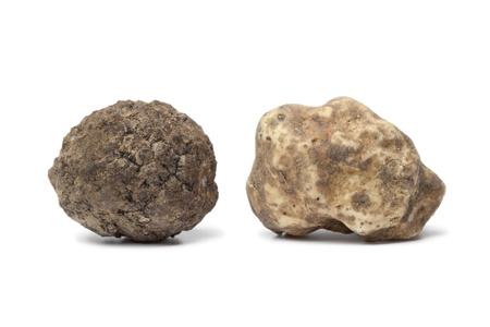 Photo pour  Black and white truffle on white background - image libre de droit
