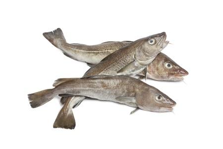Fresh atlantic cod fishes on white background