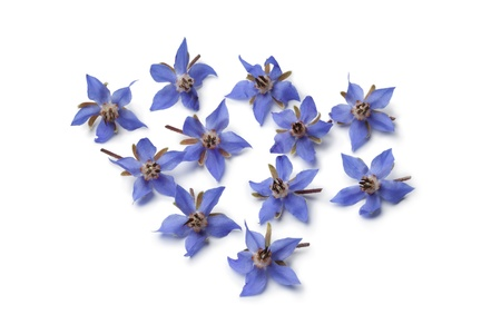 Fresh blue borage flowers for decoration at white background