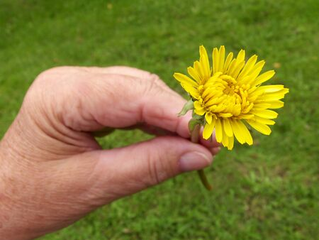 old hand and flower