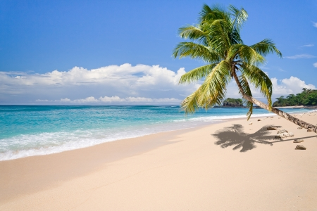 Desert island with palm tree on the beach