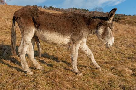 Photo pour size penis donkey - image libre de droit