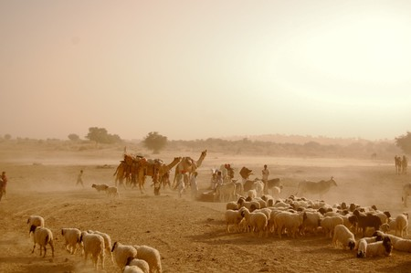 desert of rajastan