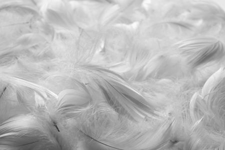 Feathers background. Black and white. Shallow depth of field.