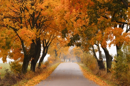 Autumn - road with colorful vibrant maple trees  Fall in Poland