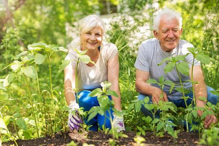 Photo pour Smiling happy elderly couple gardening - image libre de droit