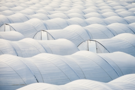 Pattern of endless sea of plastic horticulture greenhouse tunnels for intensive farming of vegetables.