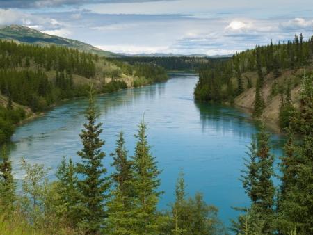 Yukon River just north of Whitehorse  Yukon Territory  Canada  a major stream and waterway in Alaska and the Yukon