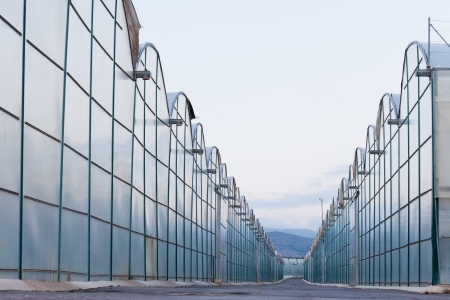 Large scale commercial greenhouses for agricultural veggie production in two endless rows reaching horizon