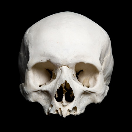 real human Skull. Upper half. with black background