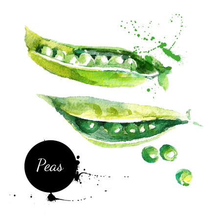 Peas. Hand drawn watercolor painting on white background. Vector illustrationのイラスト素材