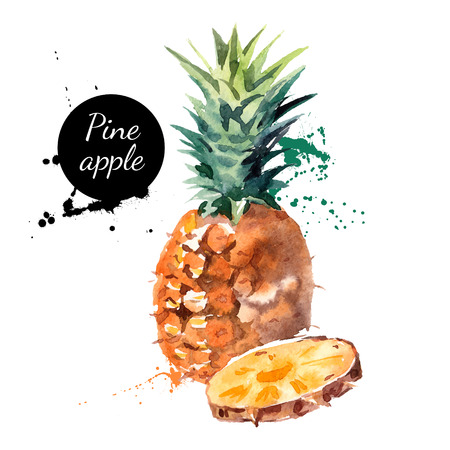 Illustration pour Hand drawn watercolor painting on white background. Vector illustration of fruit pineapple - image libre de droit