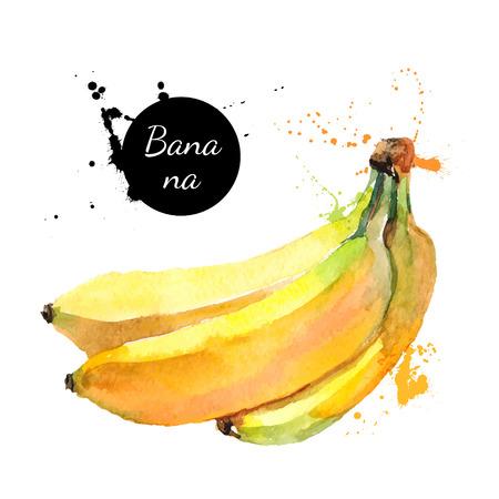 Illustration pour Hand drawn watercolor painting on white background. Vector illustration of fruit banana - image libre de droit