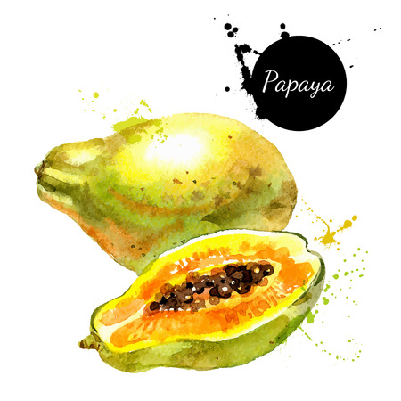 Hand drawn watercolor painting on white background. Vector illustration of fruit papaya