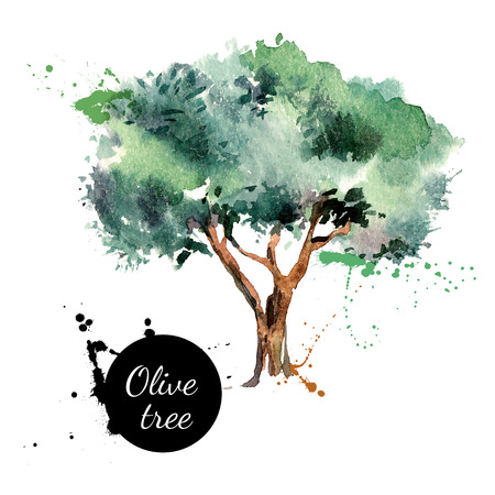 Olive tree vector illustration. Hand drawn watercolor painting on white background
