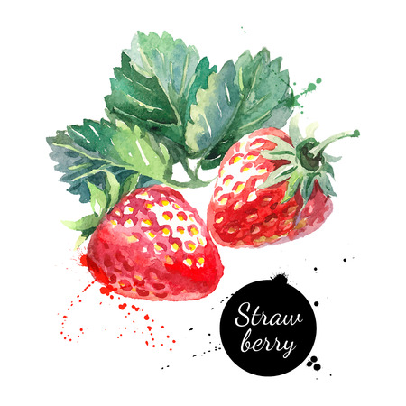 Ilustración de Hand drawn watercolor painting strawberry on white background. Vector illustration of berries - Imagen libre de derechos