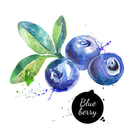 Hand drawn watercolor painting blueberry on white background. Vector illustration of berries
