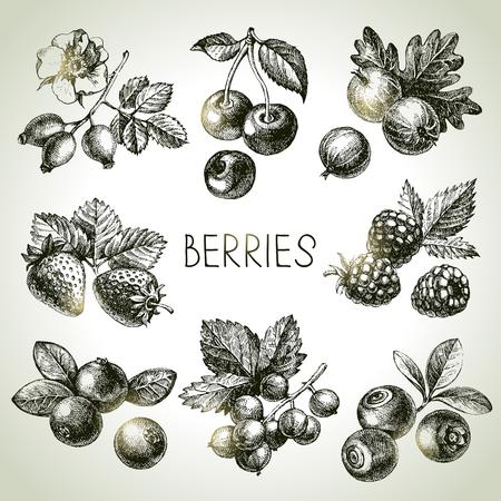 Illustration pour Hand drawn sketch berries set. Vector illustration of eco food - image libre de droit