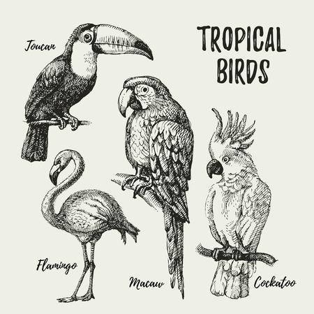 Illustration pour Hand drawn sketch black and white vintage exotic tropical birds set. Vector illustration isolated object - image libre de droit