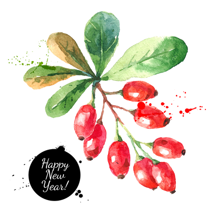 Illustration pour Watercolor ripe barberries. Hand drawn vector isolated christmas illustration - image libre de droit