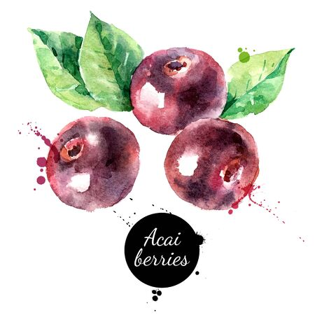 Illustration pour Watercolor hand drawn acai berry illustration. Vector painted sketch isolated on white background. Superfoods poster - image libre de droit