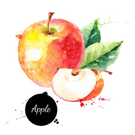 Illustration pour Watercolor hand drawn yellow and red apple. Isolated eco natural food fruit illustration on white background - image libre de droit