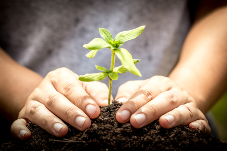 Closeup hand planting young tree in soil,save world concept